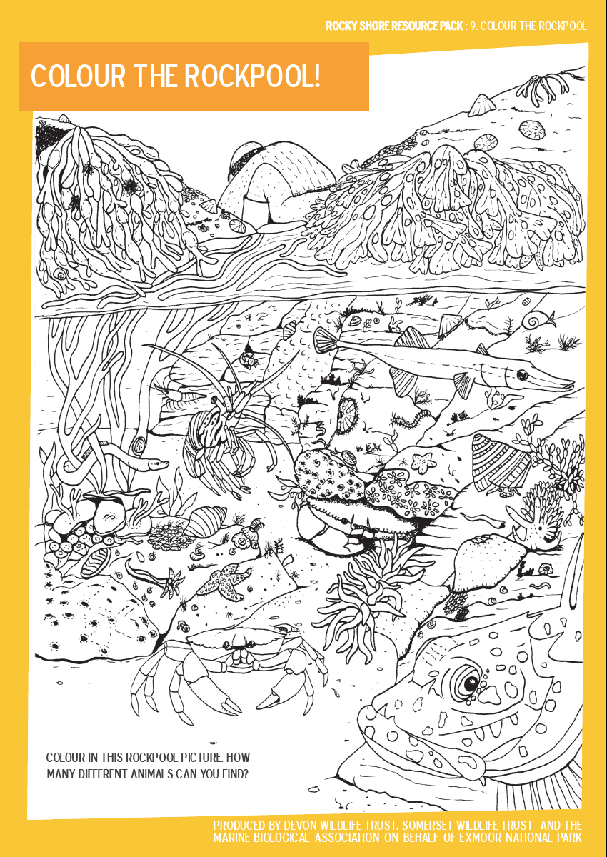 Rockpool Colouring Sheet From Exmoor Resource Pack